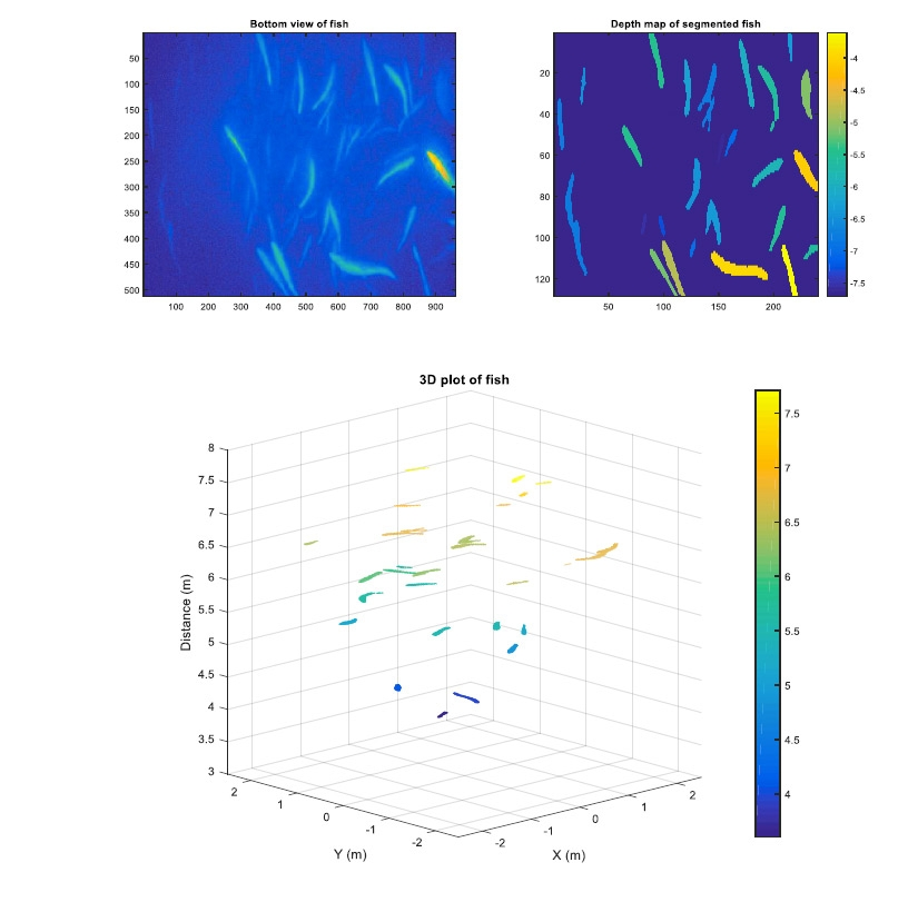Figure 8. Visualizations of fish biomass and behavior patterns.