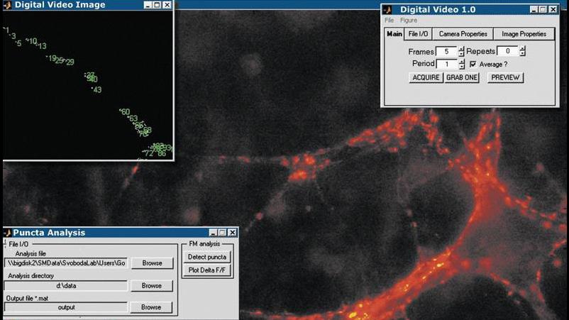 Aplicación de Image Acquisition Toolbox que adquiere y analiza imágenes de sinapsis centrales para supervisar la transmisión sináptica a lo largo del tiempo.