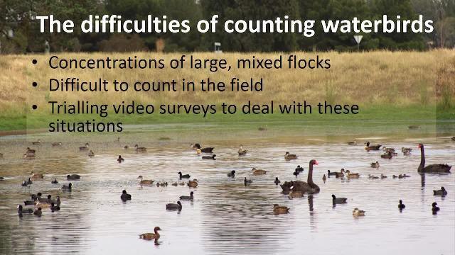 Caso de estudio: Avance en la investigación de la fauna: desarrollo de una solución para procesar vídeos de aves acuáticas